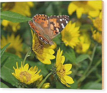 Wood Print featuring the photograph Painted Lady by James Peterson
