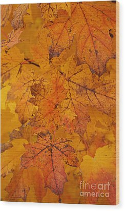 Painted Leaves Of Autumn Wood Print by Linda Shafer