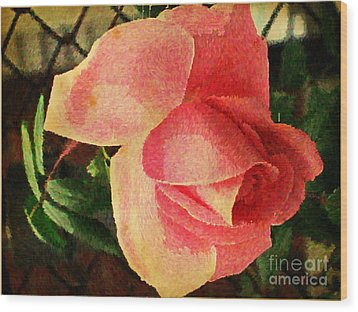 Painted Rose Wood Print by Judy Palkimas