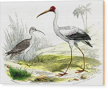 Painted Storks Wood Print by Collection Abecasis