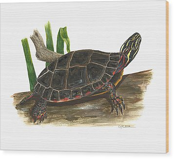Painted Turtle Wood Print by Cindy Hitchcock