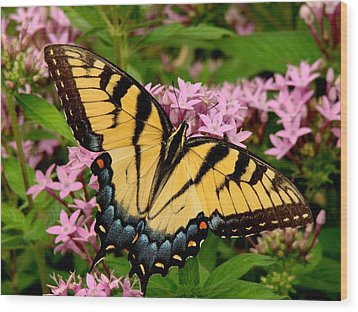 Painted Wings Wood Print by Rodney Lee Williams