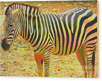Painted Zebra Wood Print