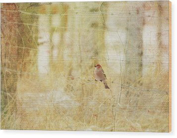 Painterly Image Of A Male Pine Grosbeak Wood Print by Roberta Murray