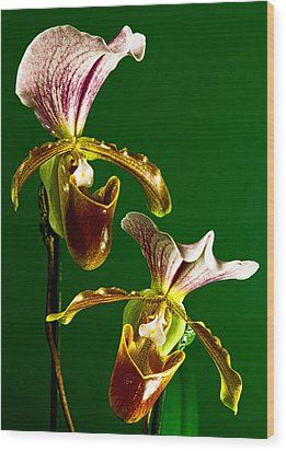 Pair Of Lady Slipper Orchids Wood Print