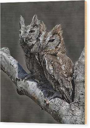 Pair Of Screech Owls Wood Print by JRP Photography