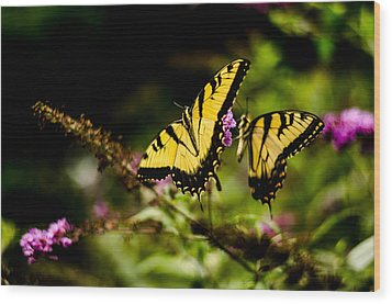 Pair Of Yellow Swallowtails Wood Print
