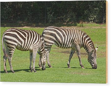 Wood Print featuring the photograph Pair Of Zebras by Charles Beeler