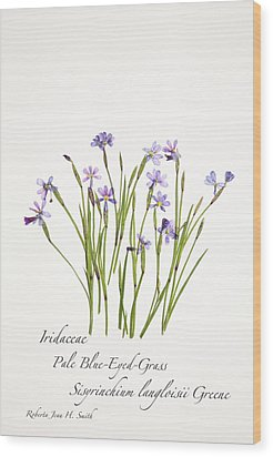 Pale Blue-eyed Grass Wood Print