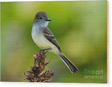Pale-edged Flycatcher Wood Print