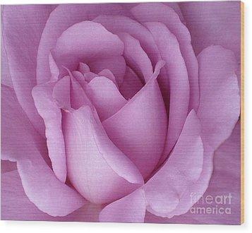 Pale Magenta Rose Wood Print by Paul Clinkunbroomer