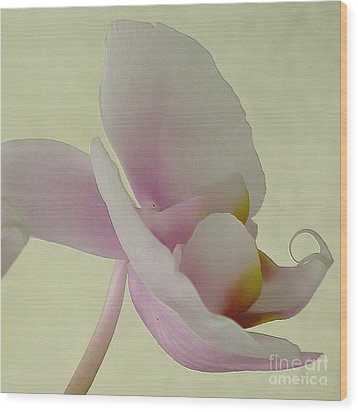 Pale Orchid On Cream Wood Print