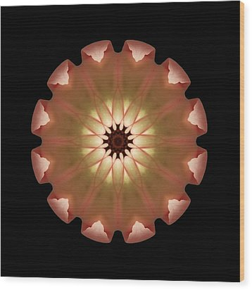 Pale Pink Tulip Flower Mandala Wood Print by David J Bookbinder
