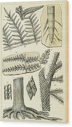 Wood Print featuring the photograph Paleozoic Flora, Calamites, Illustration by British Library