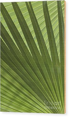 Palm Abstract Wood Print by Patty Colabuono