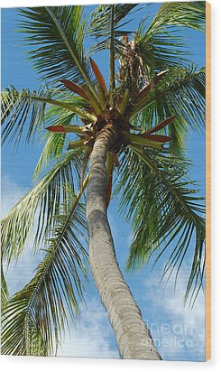 Palm And Sky Wood Print by Kathy Gibbons
