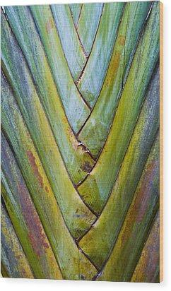Palm Frond Wood Print