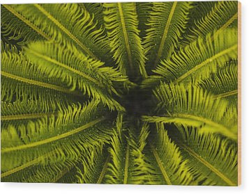 Wood Print featuring the photograph Palm Fronds by Amber Kresge