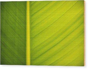 Palm Leaf Macro Abstract Wood Print by Adam Romanowicz