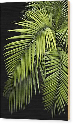 Palm Leaves Wood Print by Judy  Johnson