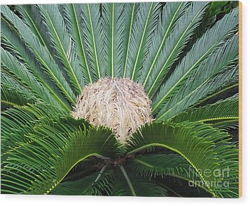 Palm Plant Wood Print by Val Miller