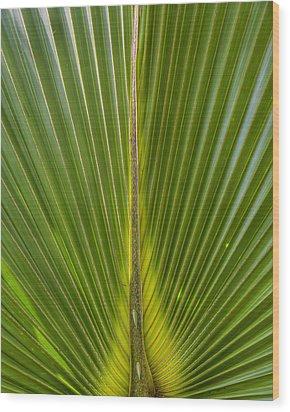 Palm Reader Wood Print