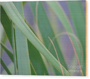 Palm Reeds Wood Print by Val Miller