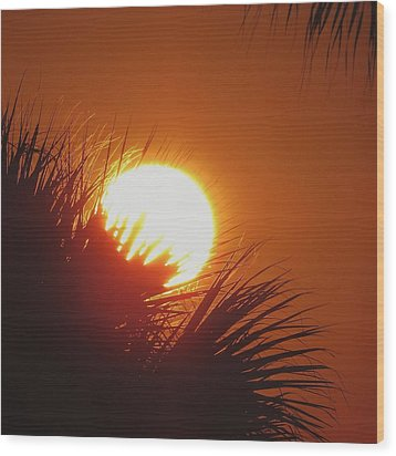 Wood Print featuring the photograph Palm Sunday by Nikki McInnes