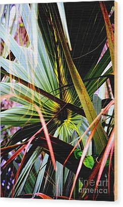 Palm Through The Fronds Wood Print