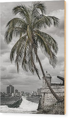 Palm Tree In Havana Bay Wood Print