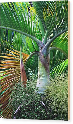 Palm Tree Inflorescence In The Rainforest  Wood Print by Karon Melillo DeVega