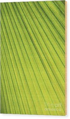 Palm Tree Leaf Abstract Wood Print by Elena Elisseeva