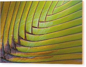 Palm Tree Leafs Wood Print by Sebastian Musial