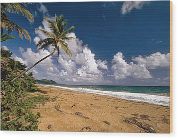 Palm Tree On Maunabo Beach Puerto Rico Wood Print by George Oze