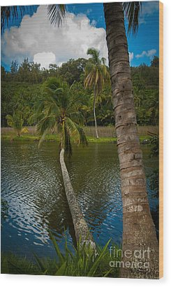 Palm Tree Over River Wood Print