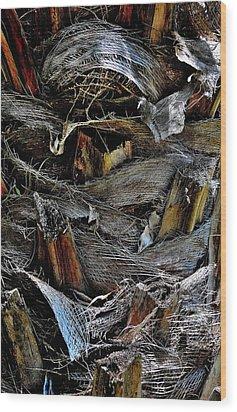 Palm Tree Trunk - Darwin - Australia Wood Print