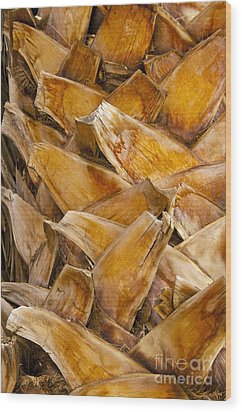 Palm Tree Trunk Detail Wood Print by Bob Phillips
