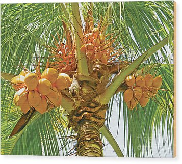 Palm Tree With Coconuts Wood Print by Val Miller