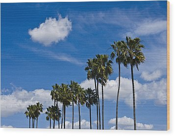 Palm Trees In San Diego California No. 1661 Wood Print by Randall Nyhof