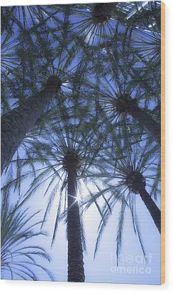 Wood Print featuring the photograph Palm Trees In The Sun by Jerry Cowart