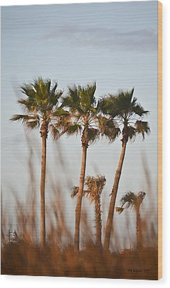 Palm Trees Through Tall Grass Wood Print by Allen Sheffield