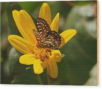 Palmer's Metalmark Butterfly Wood Print