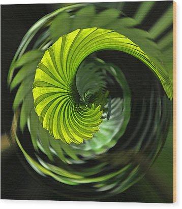 Palmetto Nautilus Wood Print