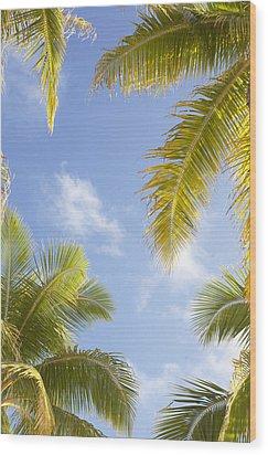 Palms And Sky Wood Print by Brandon Tabiolo