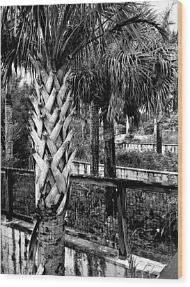 Palms And Walls In Black And White Wood Print