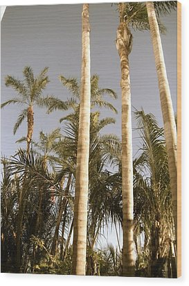 Palms Wood Print by Brynn Ditsche