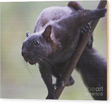 Panamanian Tree Squirrel Wood Print by Heiko Koehrer-Wagner