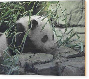 Panda Cub Bao Bao Wood Print by Jack Nevitt