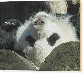 Panda Playing Possum Wood Print
