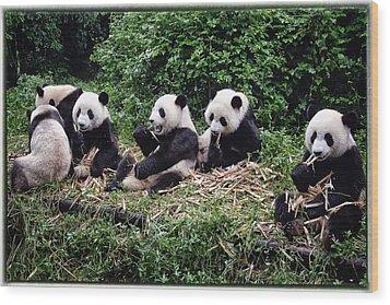 Pandas In China Wood Print by Joan Carroll